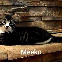 Meeko2