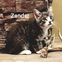 Zander2